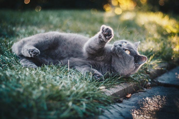 chat sans avance de frais