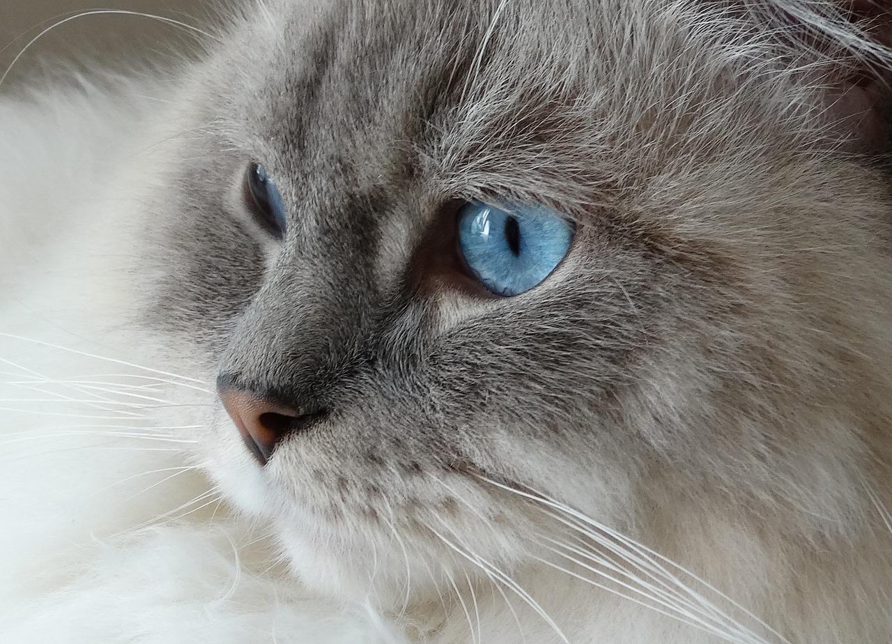 assurance chat sans questionnaire de santé