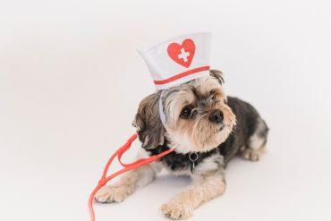 assurance chien sans questionnaire de santé